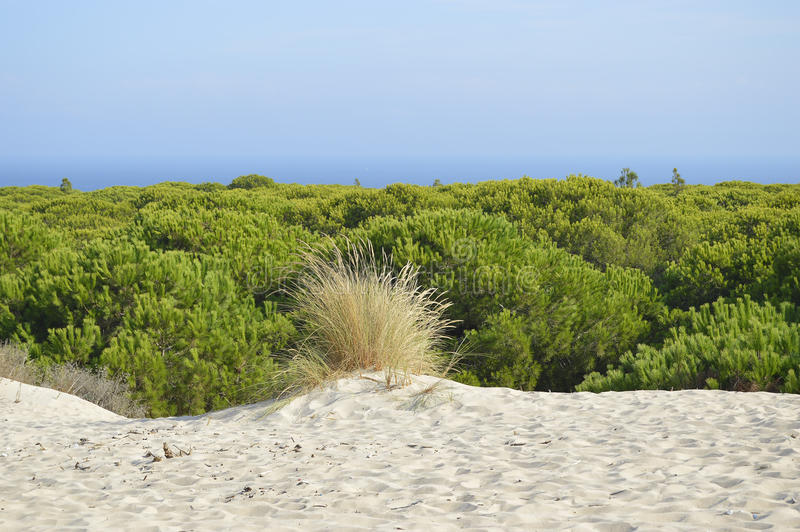 Playa Cádiz España de Bolonia imagenes de archivo