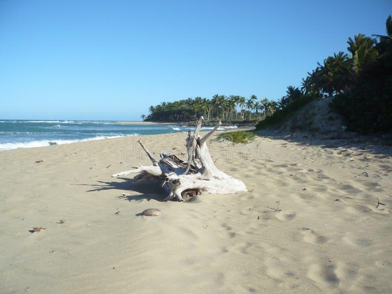Playa Cangrejo -业余时间 免版税库存照片