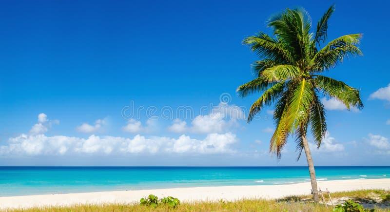 Playa con la alta palmera, islas caribeñas imagen de archivo libre de regalías