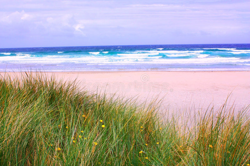 Playa con la hierba salvaje fotografía de archivo