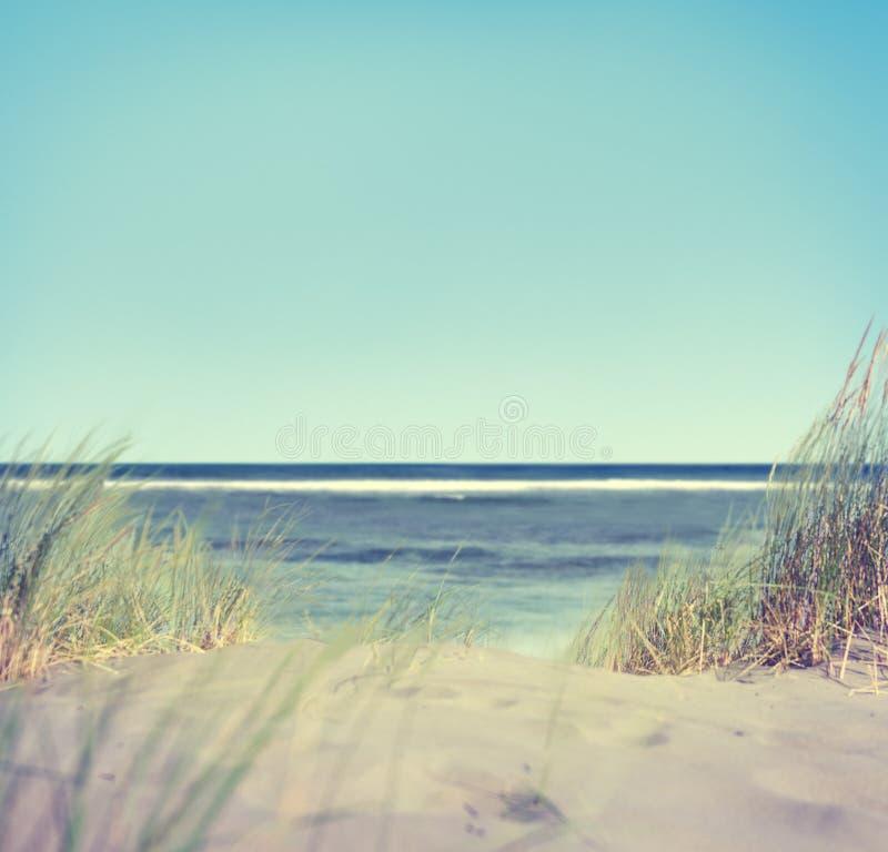 Download Playa Con La Hierba Y La Arena Foto de archivo - Imagen de paisaje, azul: 41919694