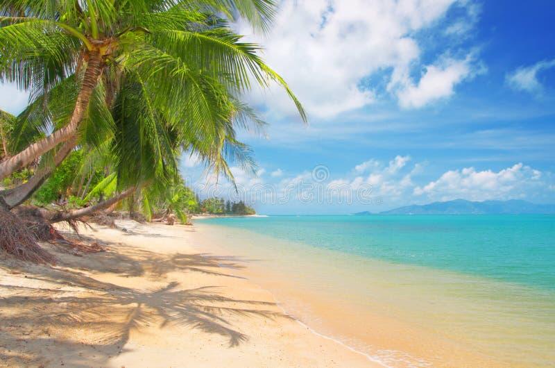 Playa con la palma y el mar de coco imagenes de archivo