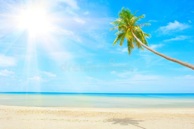 Playa con la palmera sobre la arena imagen de archivo