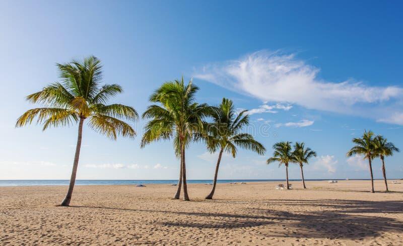 Playa con las palmas fotografía de archivo libre de regalías