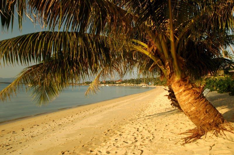 Playa con las palmeras foto de archivo libre de regalías