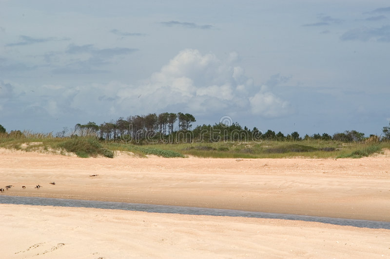 Playa con los árboles y la secuencia de marea fotografía de archivo libre de regalías