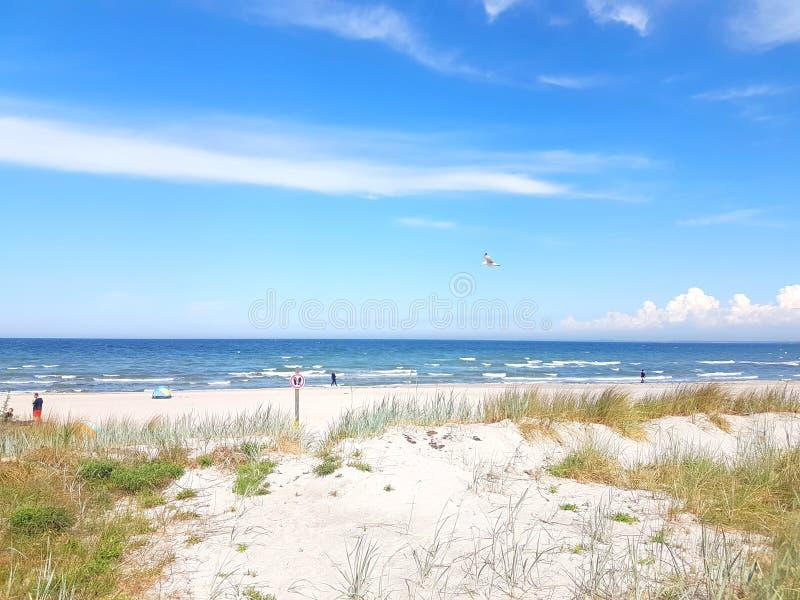 playa con pocas personas y gaviotas que vuelan foto de archivo
