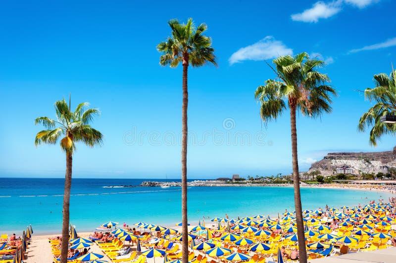 Playa de Amadores strand canaria gran spain arkivbilder