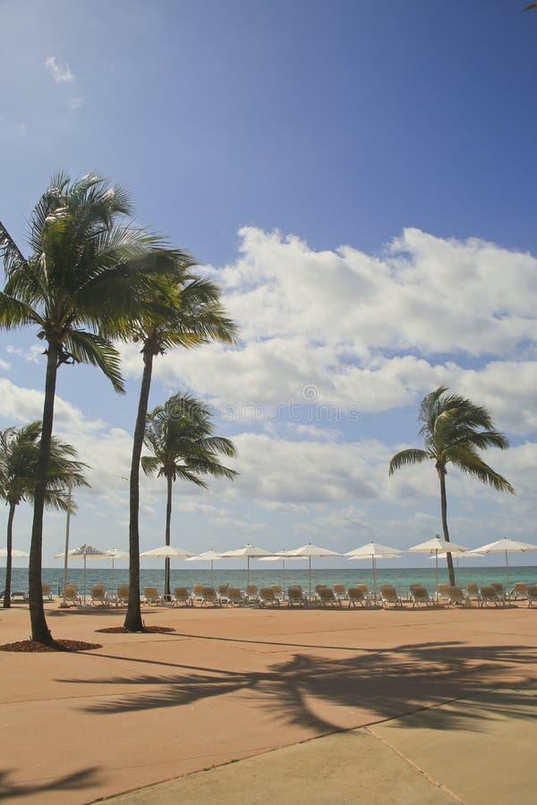 Playa De Bahmas Enmarcada Por Las Palmeras, Las Sillas Y Los ...
