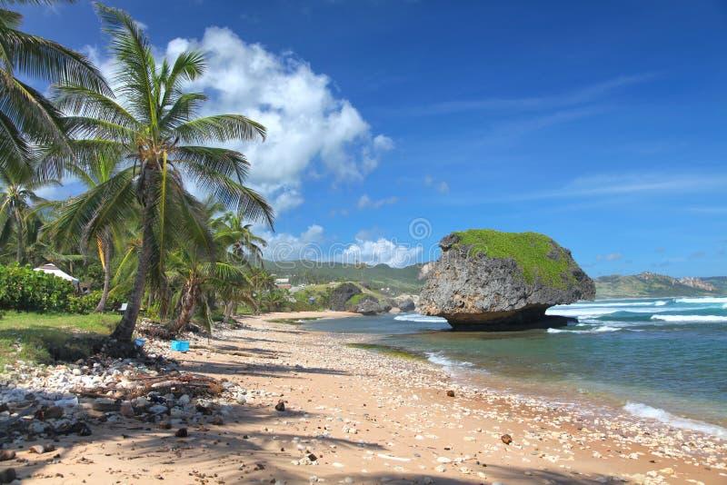 Playa de Bathsheba, Barbados fotografía de archivo libre de regalías