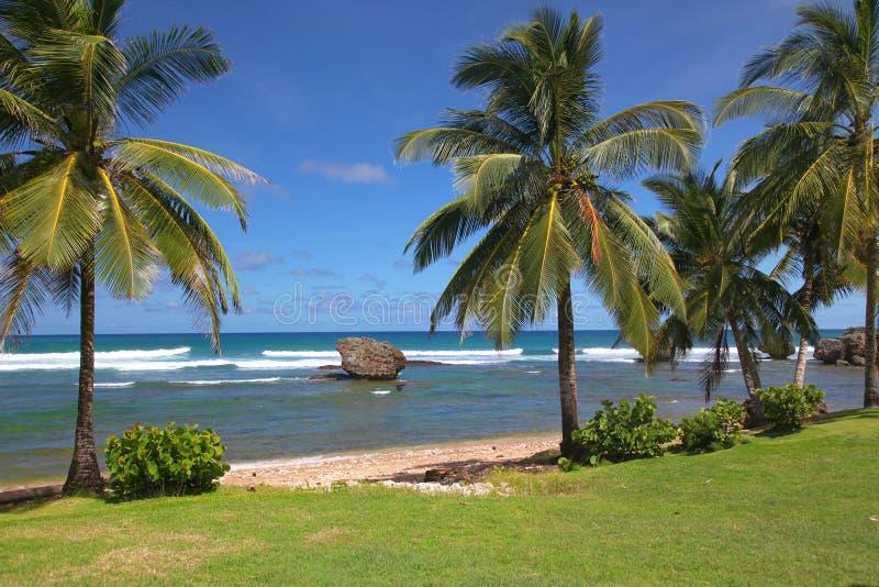 Playa de Bathsheba, Barbados imágenes de archivo libres de regalías