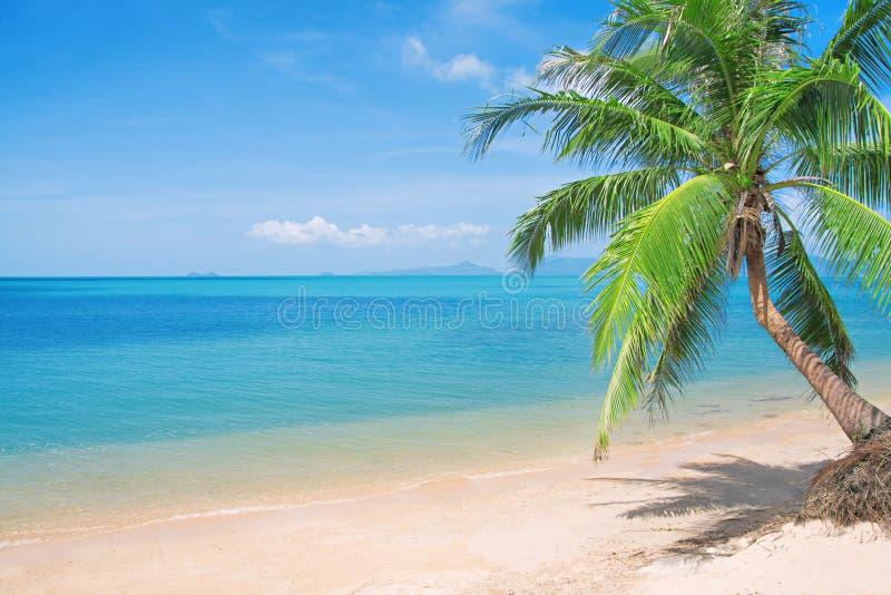 Playa de Beaautiful con la palma y el mar de coco imagen de archivo libre de regalías
