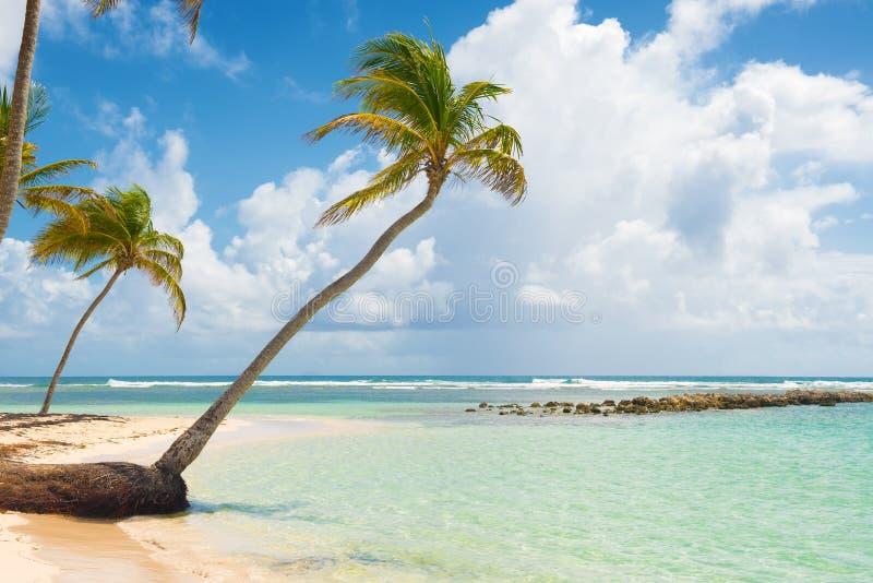Playa de Caravelle, St Anne, Guadalupe, las Antillas francesas imágenes de archivo libres de regalías