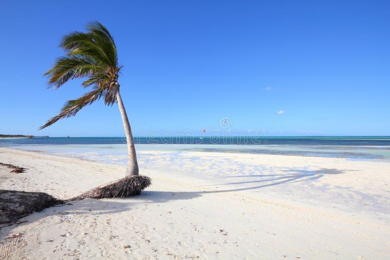 Playa de Cayo Guillermo, Cuba fotografía de archivo