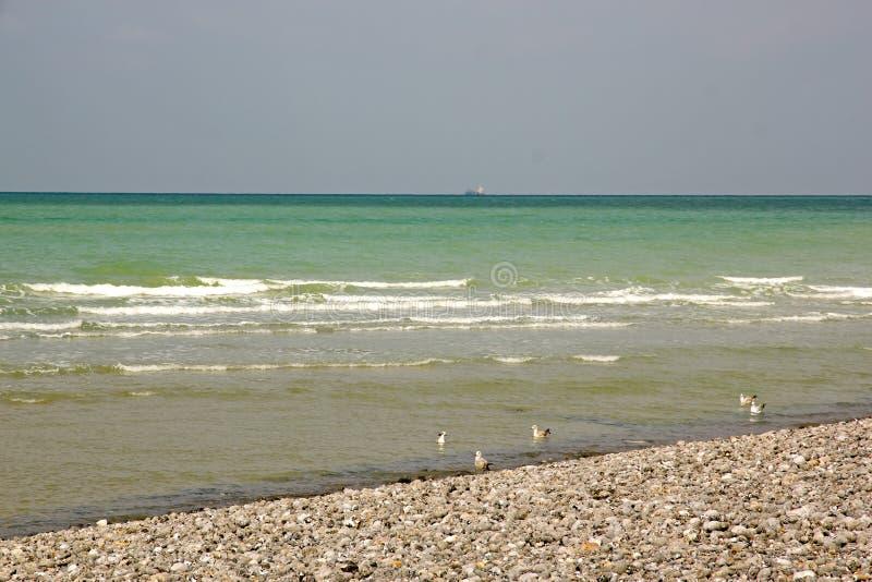 Playa de Dieppe, gaviotas Normandía, Sena-Marítima Francia fotografía de archivo libre de regalías