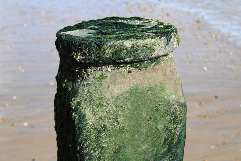 Playa de Eastbourne foto de archivo