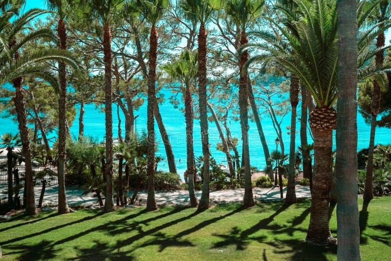 Playa de Formentor Cala Pi de la Posada, praia bonita no tampão Formentor, Palma Mallorca, Espanha imagem de stock