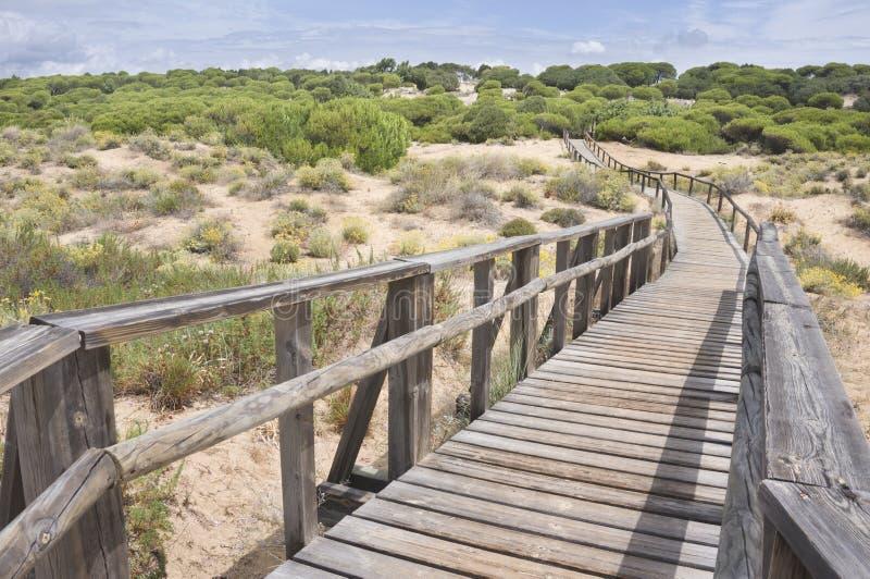 Download Playa de Huelva foto de archivo. Imagen de vehículos - 41907654