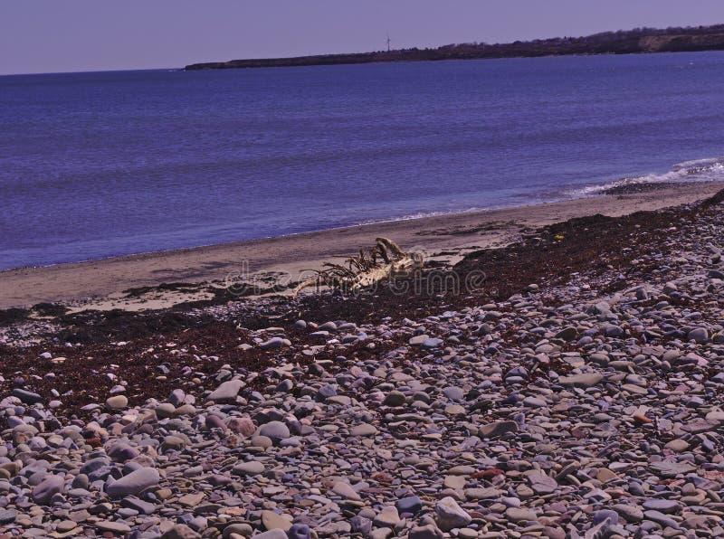 Playa 3505 de la alga marina de madera de la deriva fotografía de archivo