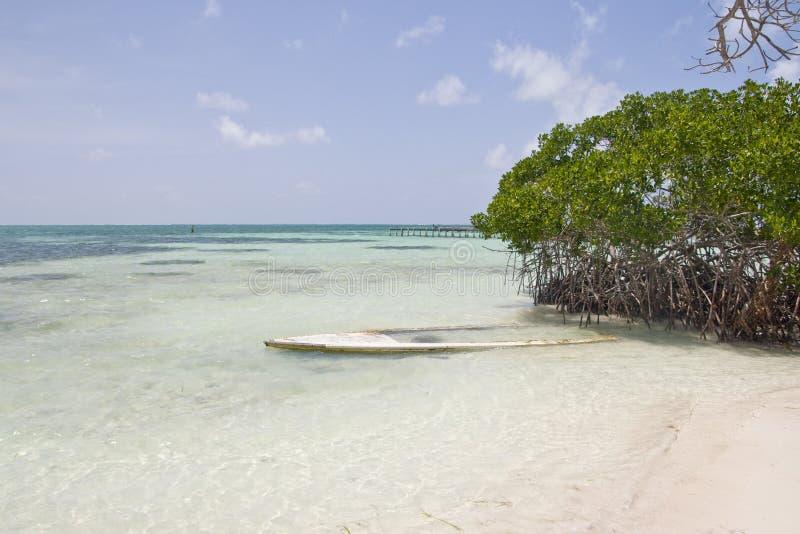 Playa de la arena con el bosque del mangle, calafate de Caye fotografía de archivo