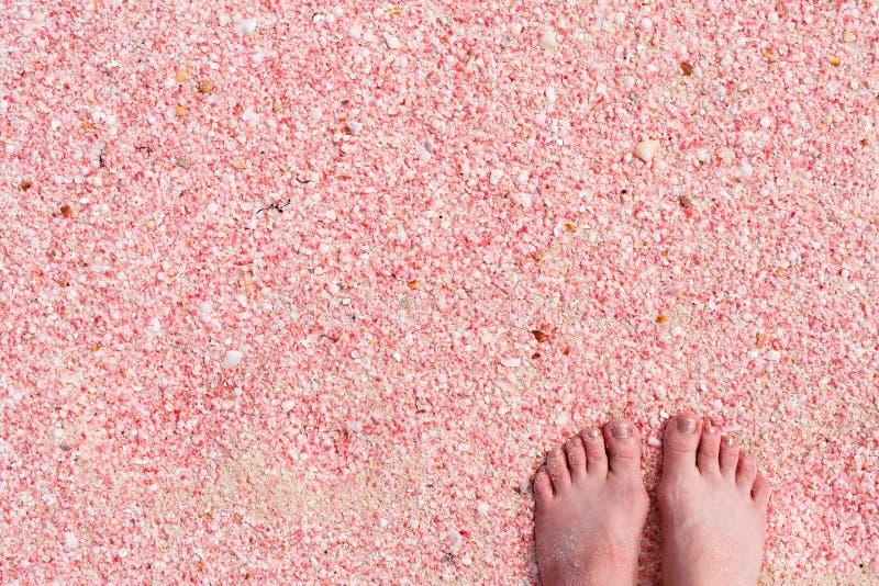 Playa de la arena del rosa de Barbuda foto de archivo