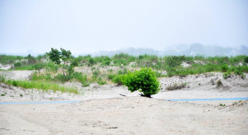 Playa de la mañana imagen de archivo libre de regalías