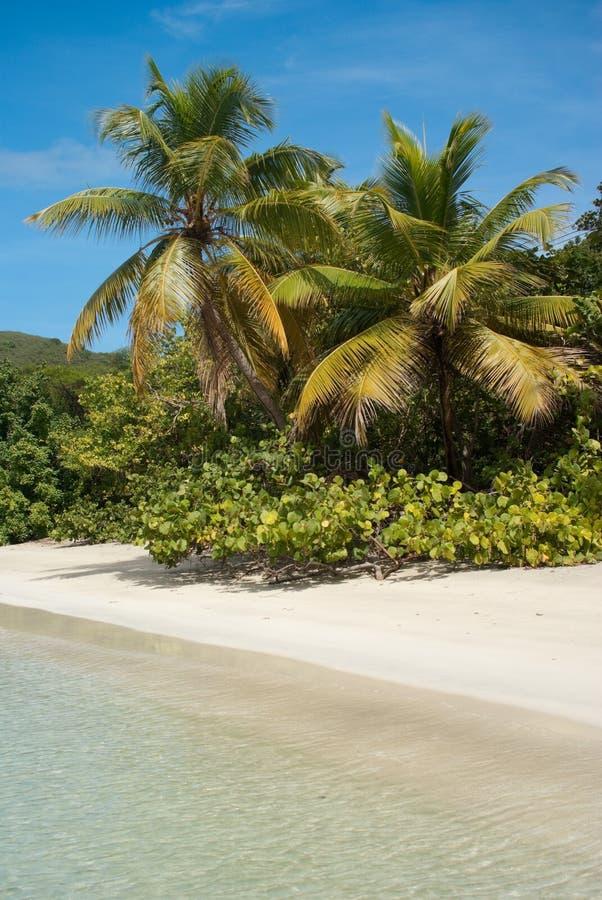 Playa de la palmera fotografía de archivo libre de regalías