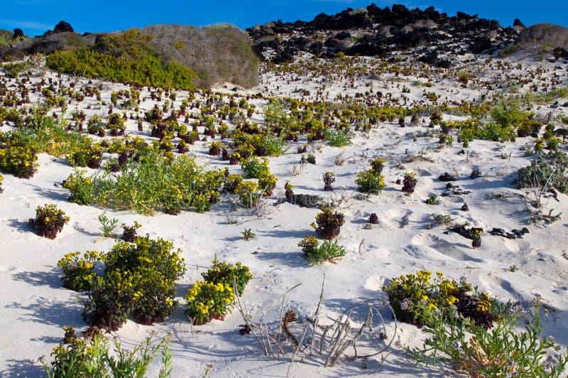 Playa de Lanzarote foto de archivo
