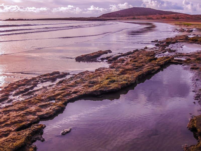 Playa De-las Amerika-Rosa stockbilder