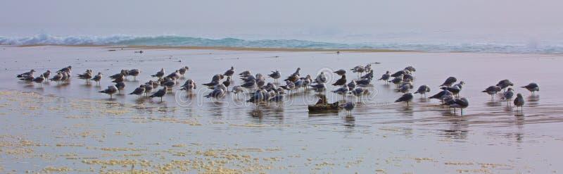 Playa de las gaviotas fotografía de archivo