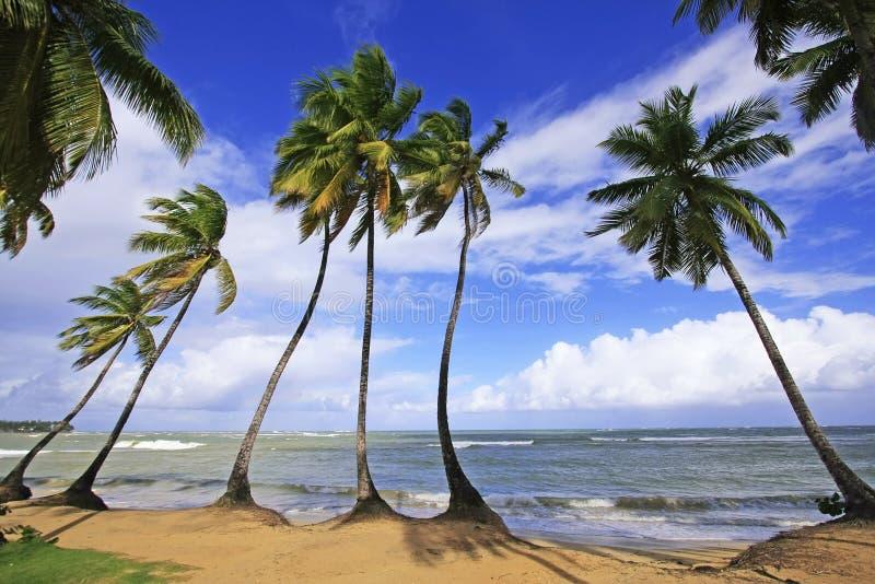 Playa de Las Terrenas, península de Samana imágenes de archivo libres de regalías