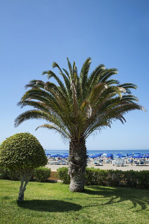 Playa de Las Vista, vistas recentemente do loand do corte na frente dele, no recurso do Los Cristianos, Tenerife, Ilhas Canárias foto de stock royalty free