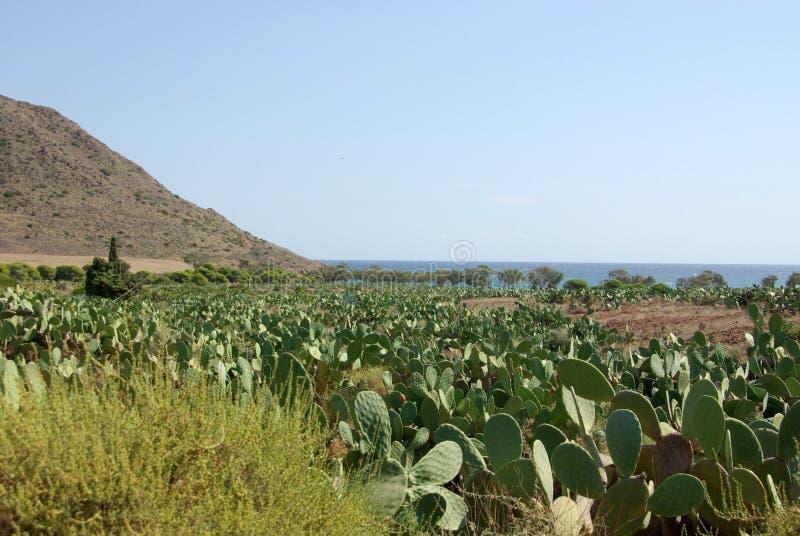 Playa de los Genoveses foto de stock royalty free
