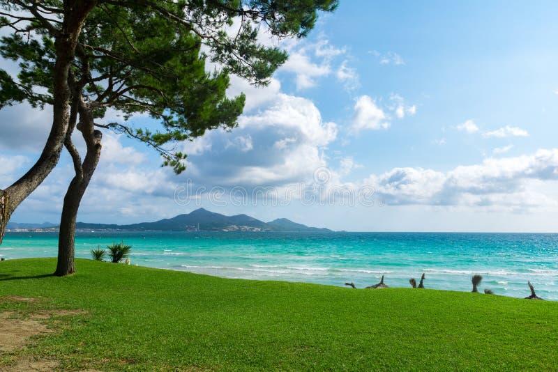 Playa de Majorca Platja de Muro en la bahía de Alcudia con el pecado Mallorca Balearic Island del árbol de pino de España fotografía de archivo libre de regalías