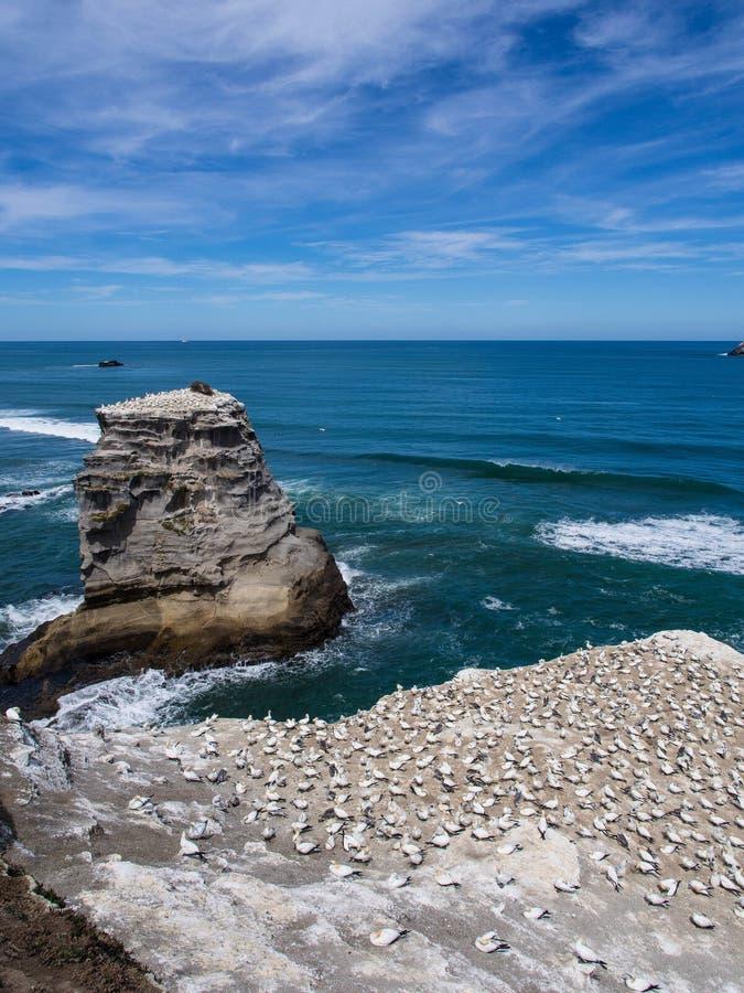 Playa de Muriwai fotos de archivo libres de regalías
