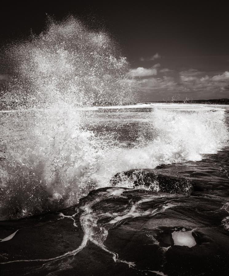 Playa de Muriwai de la colonia de Gannet cerca de Auckland imagenes de archivo