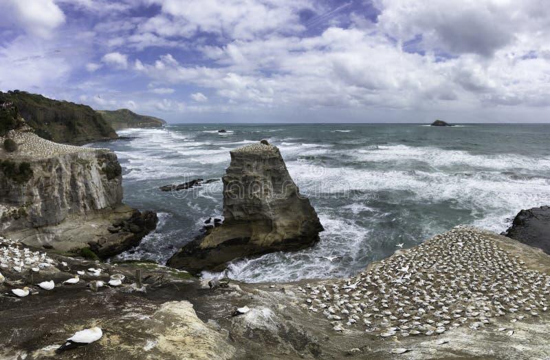 Playa de Muriwai de la colonia de Gannet cerca de Auckland imagen de archivo libre de regalías