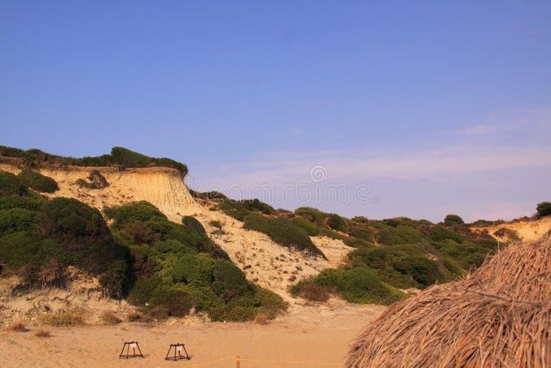 Playa de nido de la tortuga de mar del necio foto de archivo libre de regalías