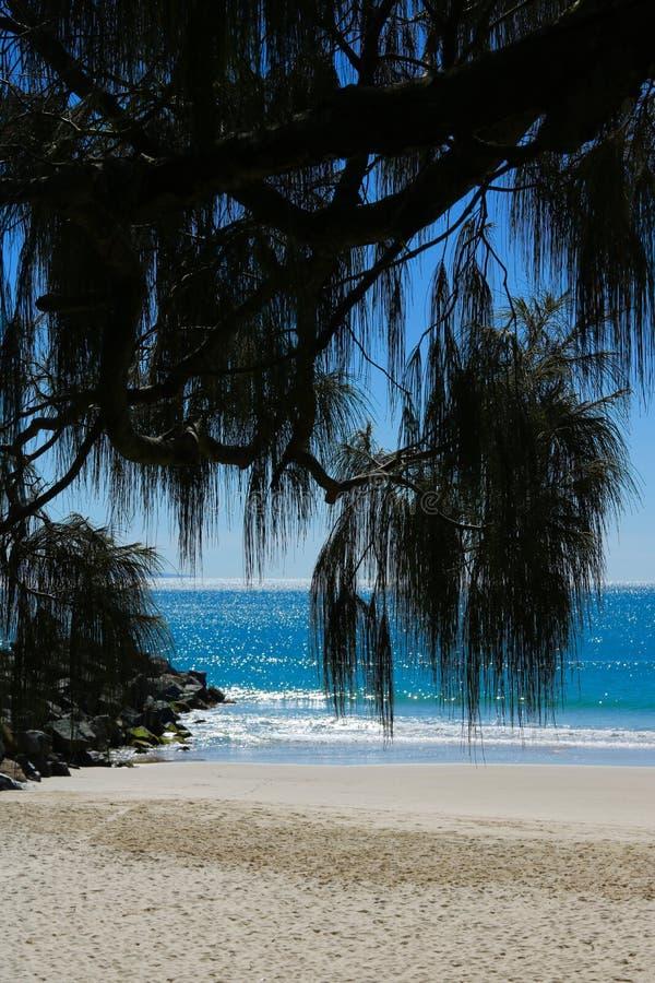 Playa de Noosa con las frondas de la palma en el primero plano - imagen del retrato imagen de archivo libre de regalías