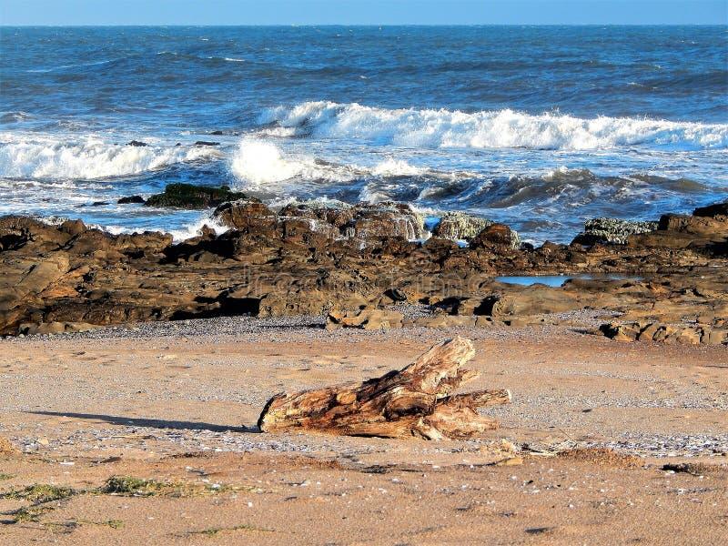 Playa de Paloma del La fotografía de archivo