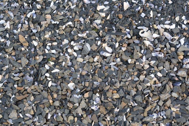 Playa de piedra de los shelles del sedimento imagen de archivo libre de regalías