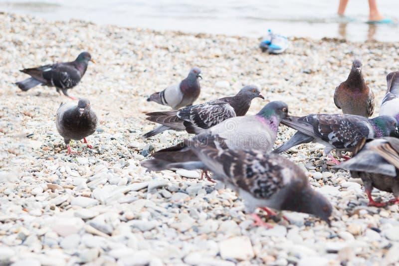 Playa de piedra de las palomas del grupo imagen de archivo libre de regalías