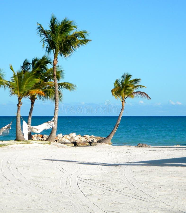 Playa de Punta Cana de los árboles de palma fotografía de archivo libre de regalías