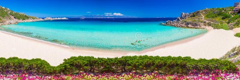 Playa de Rena Bianca de los di de Spiaggia con las rocas rojas y agua clara azul Costa Smeralda, Cerdeña, Italia imagen de archivo libre de regalías