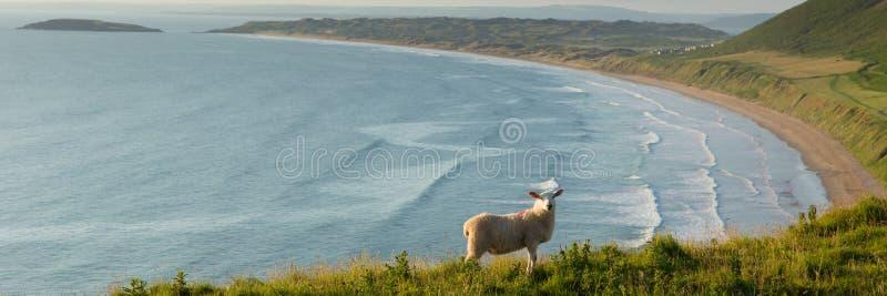 Playa de Rhossili la península el Sur de Gales Reino Unido de Gower con panorama de las ovejas foto de archivo libre de regalías
