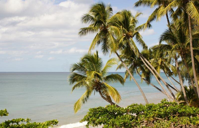 Playa de Rincon imagen de archivo