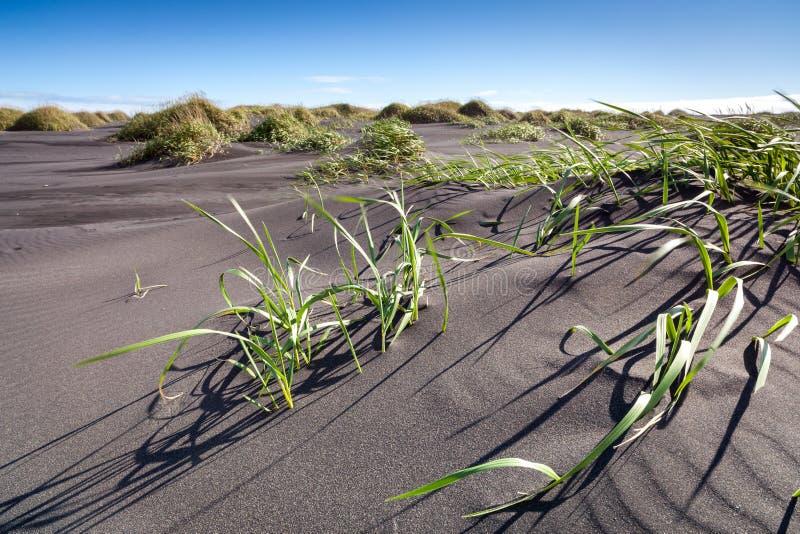 Playa de Sandy cerca de Stokksnes, Islandia del este foto de archivo libre de regalías