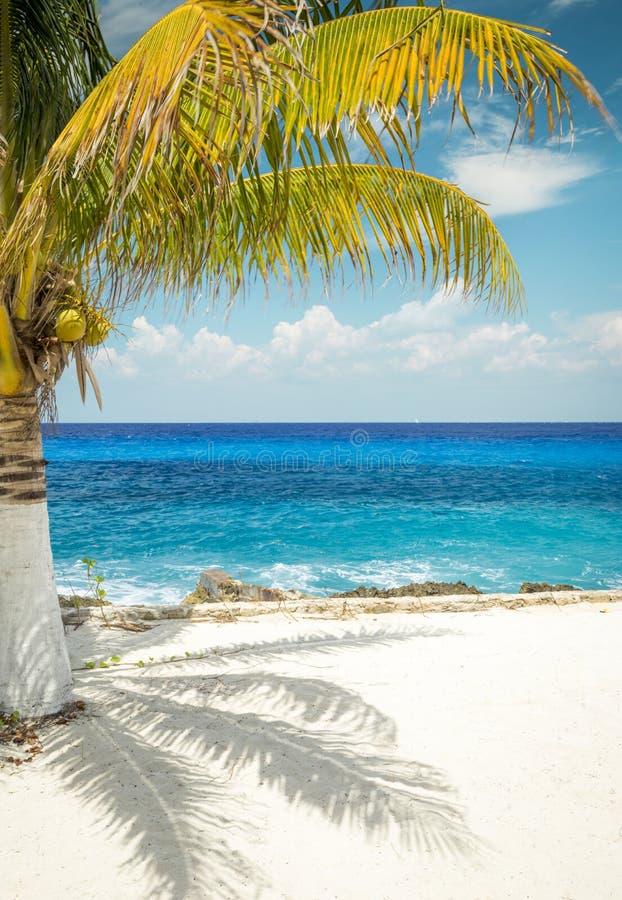 Playa de Sandy con la palmera en la isla de Cozumel, México foto de archivo libre de regalías