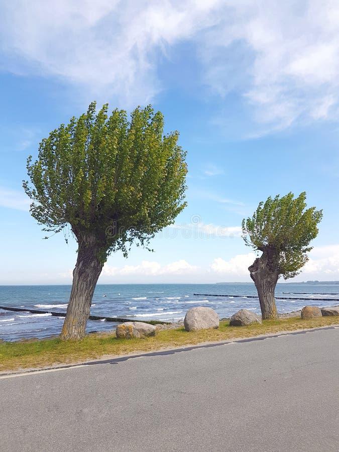 Playa de Sandy del mar Báltico fotos de archivo libres de regalías