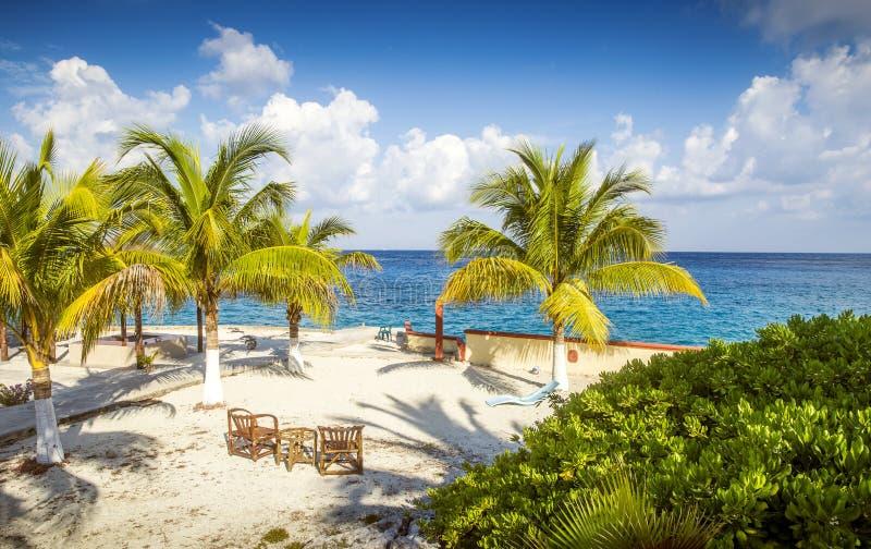 Playa de Sandy en una isla tropical con las palmeras imagen de archivo